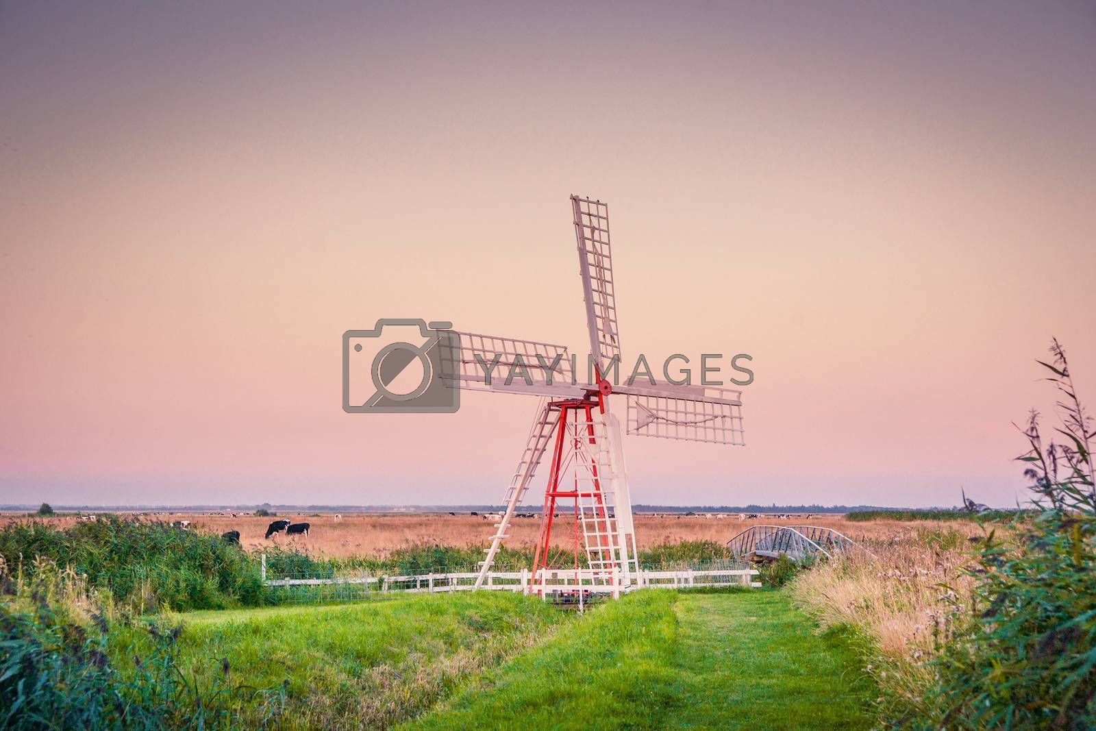 Windmill on a countryside with cows in the background
