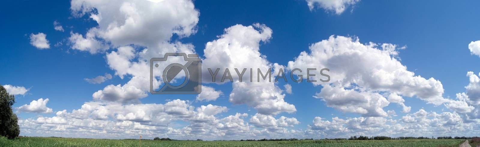 summer clouds in the sky above the corn field