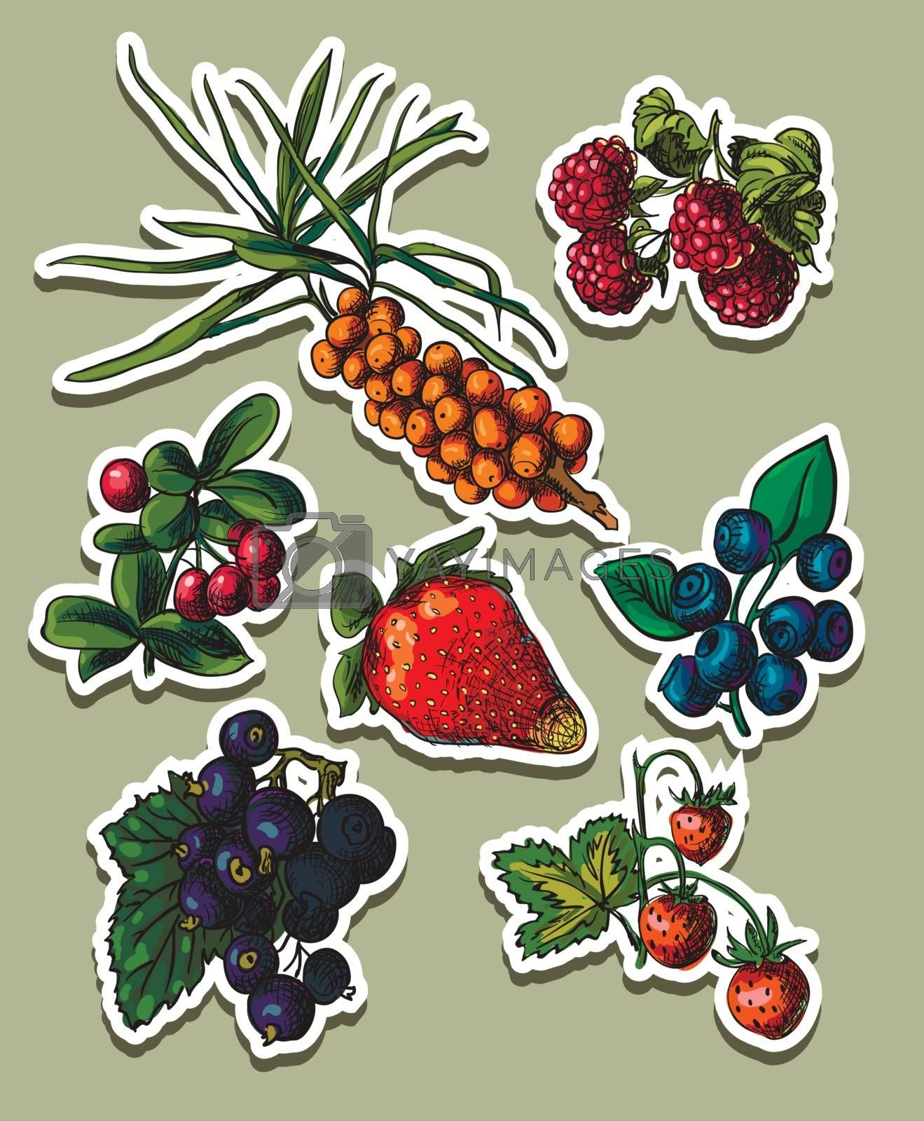 Vector illustration drawing of organic berries set