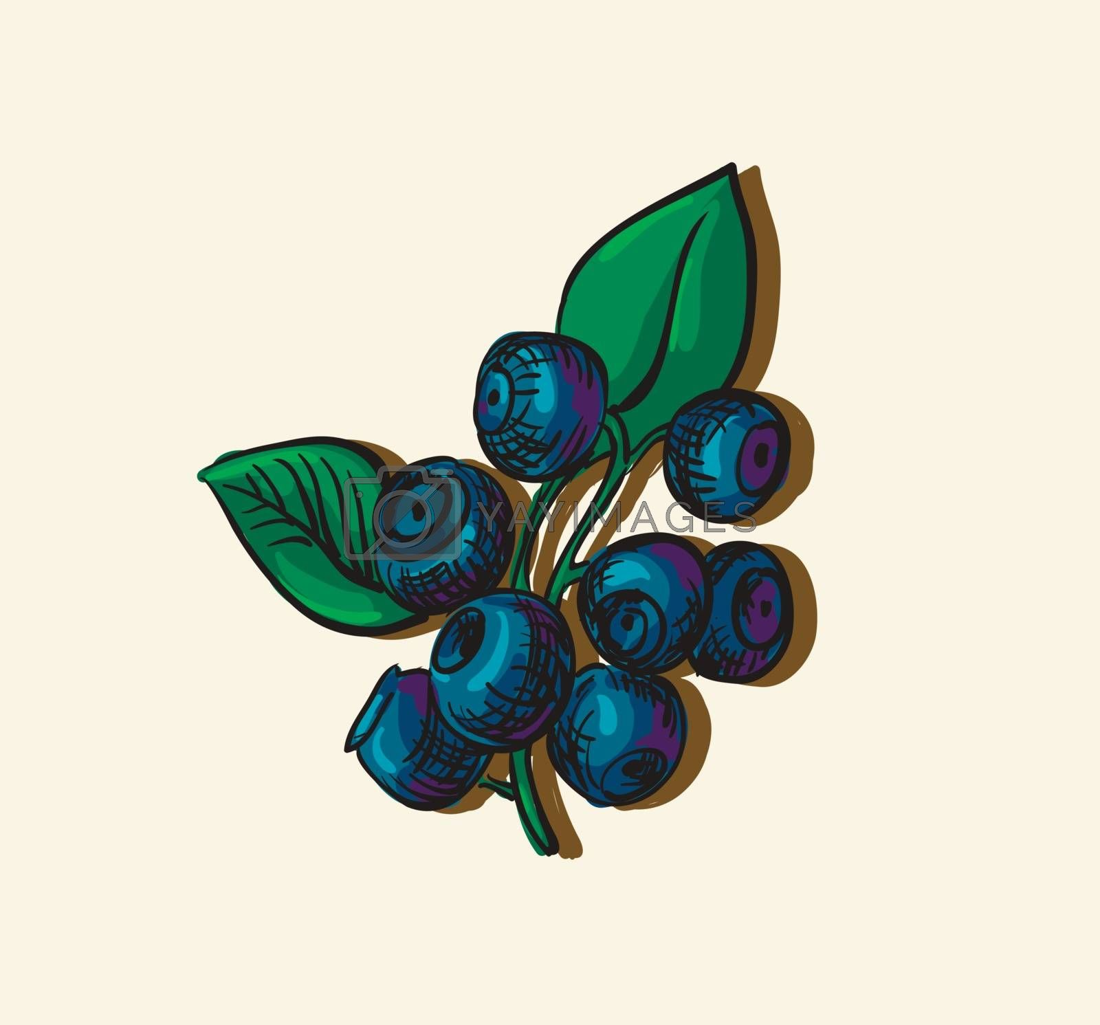 Vector illustration drawing of organic blueberries