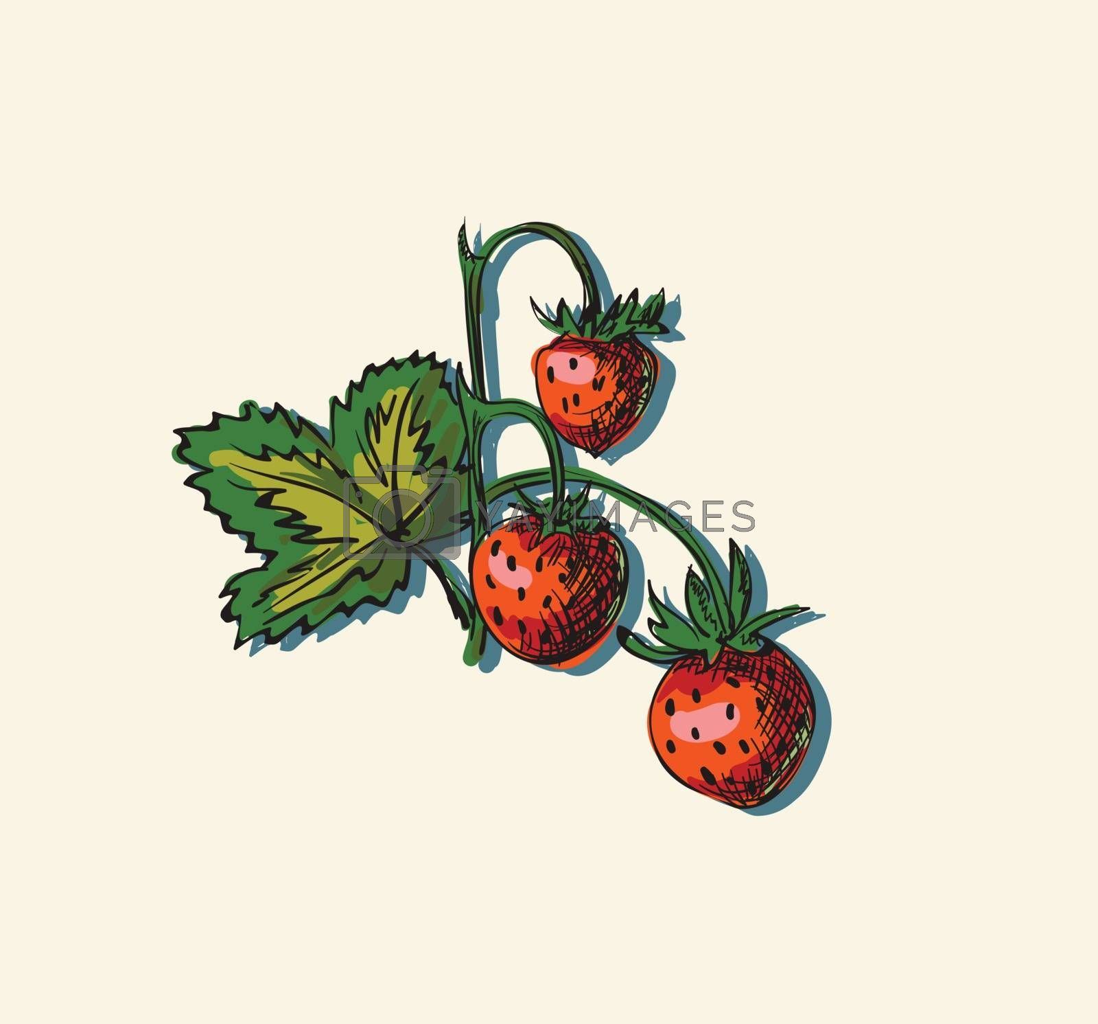 Vector illustration drawing of organic strawberry
