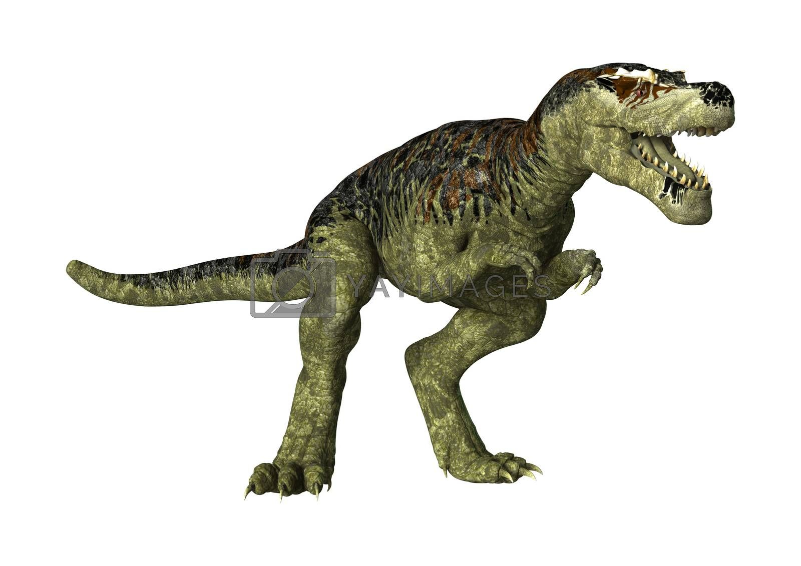 3D digital render of a dinosaur Tyrannosaurus Rex  isolated on white background
