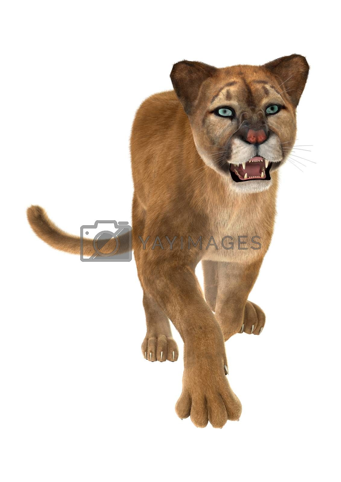 3D digital render of a big cat puma running iisolated on white background