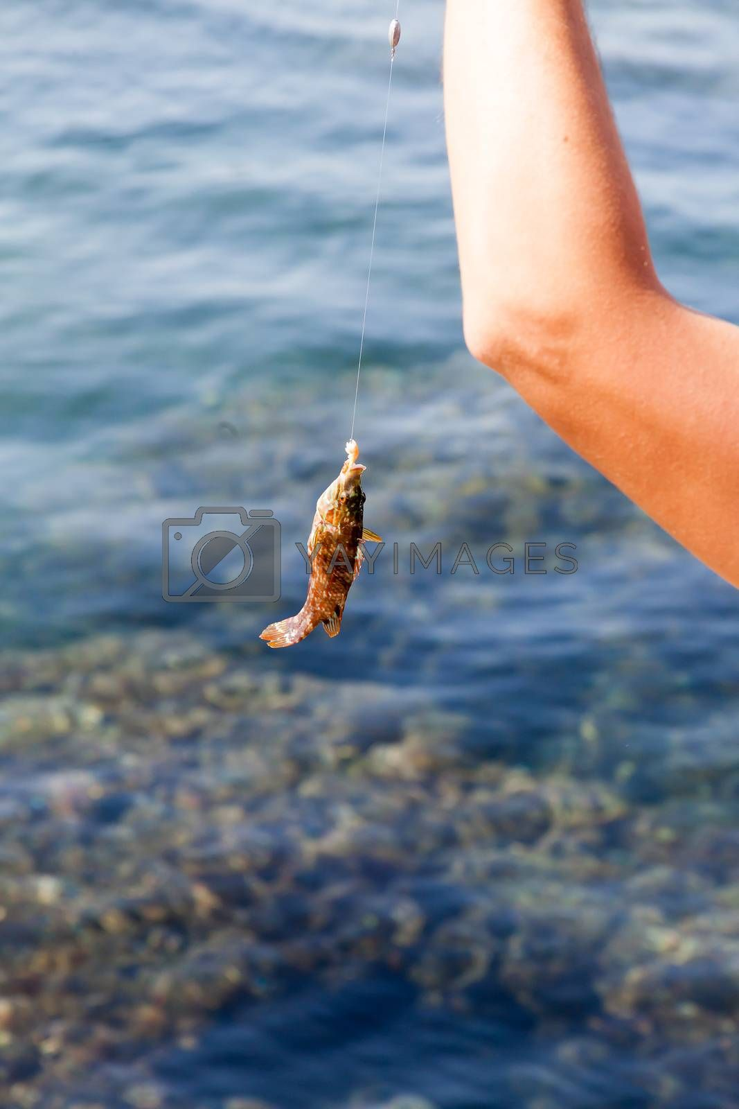 the fish hooked on a hook and hanging on a scaffold against the sea