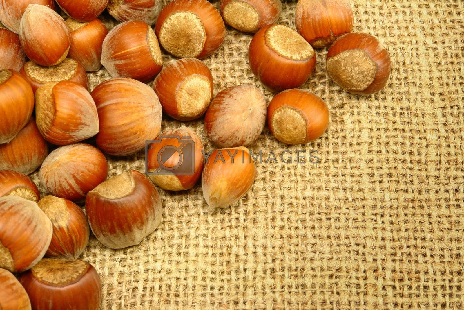Hazelnuts on Sackcloth