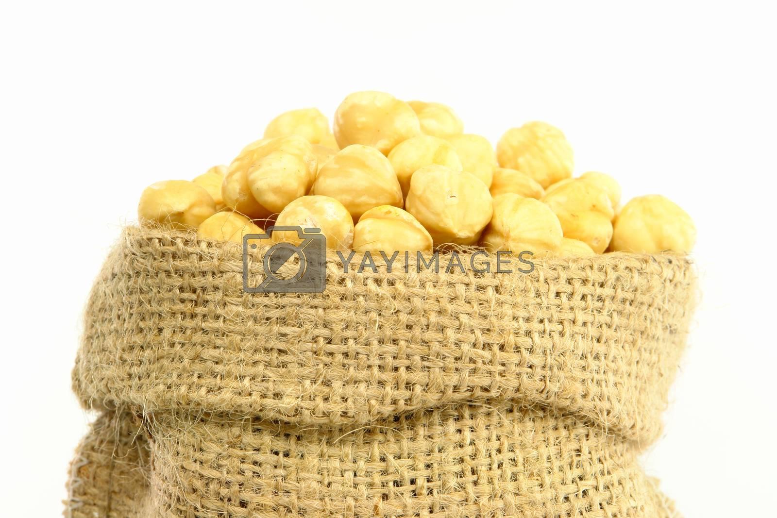 Hazelnut Closeup