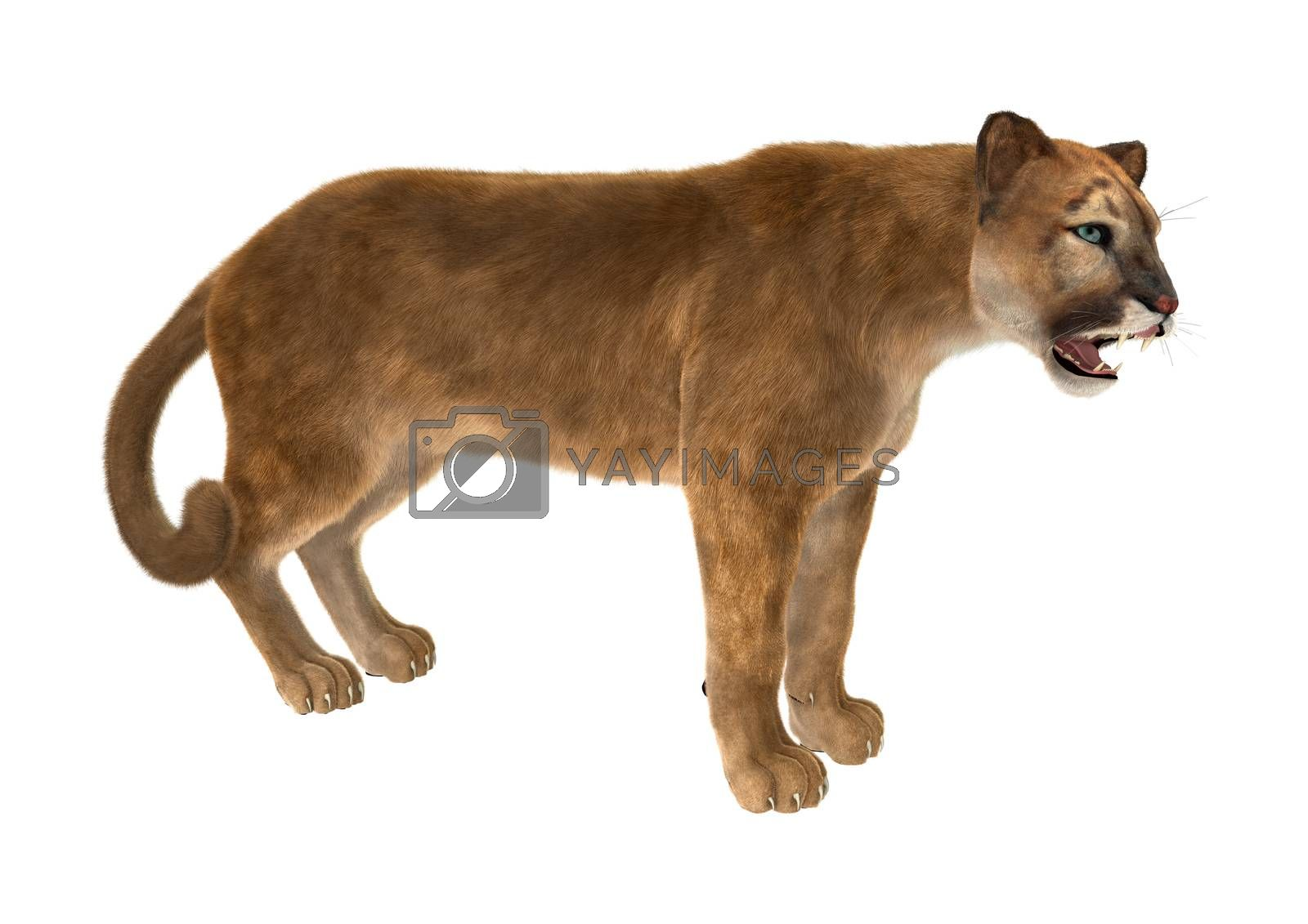 3D digital render of a big cat puma iisolated on white background