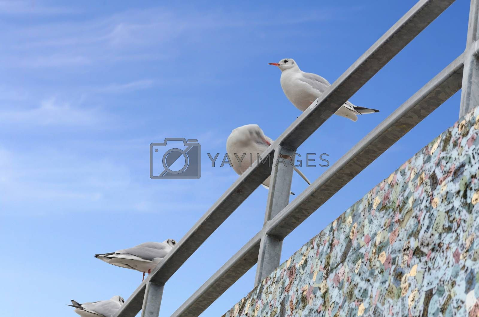Four seagulls on railing on background of blue sky.