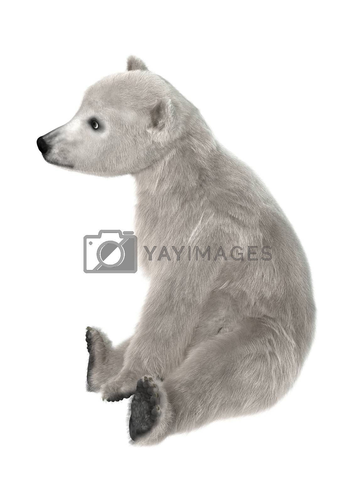 3D digital render of a polar bear cub sitting isolated on white background