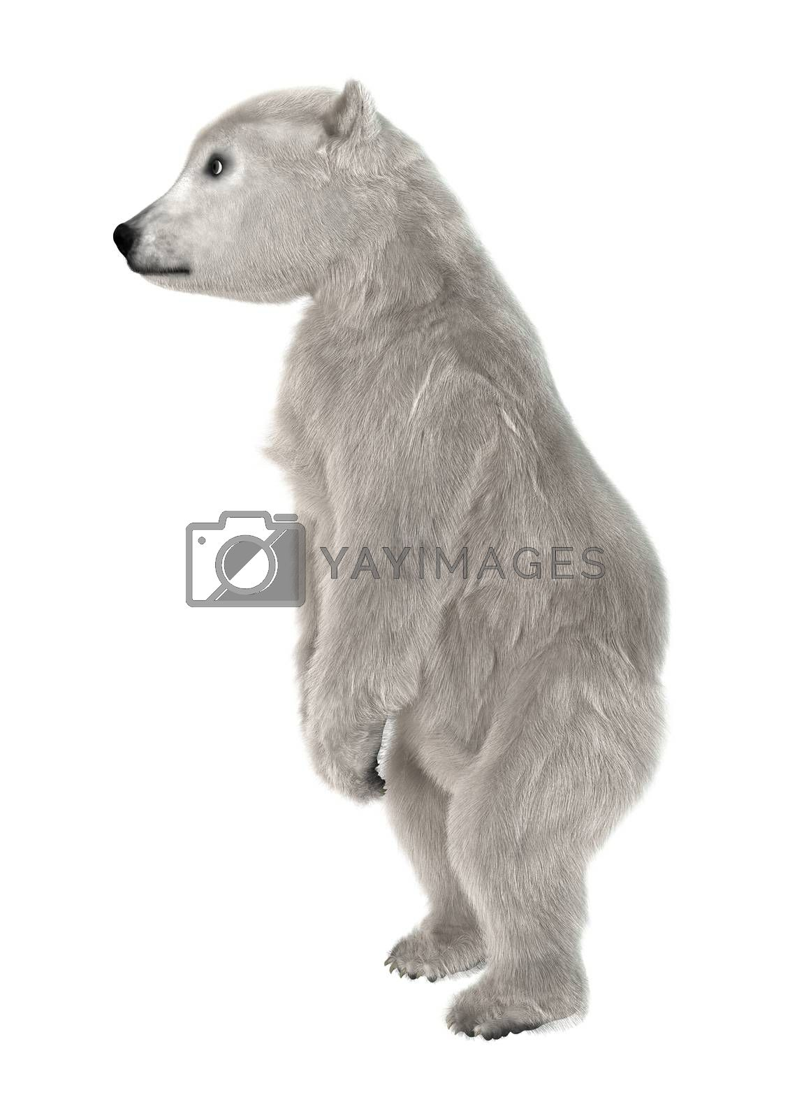 3D digital render of a polar bear cub standing isolated on white background