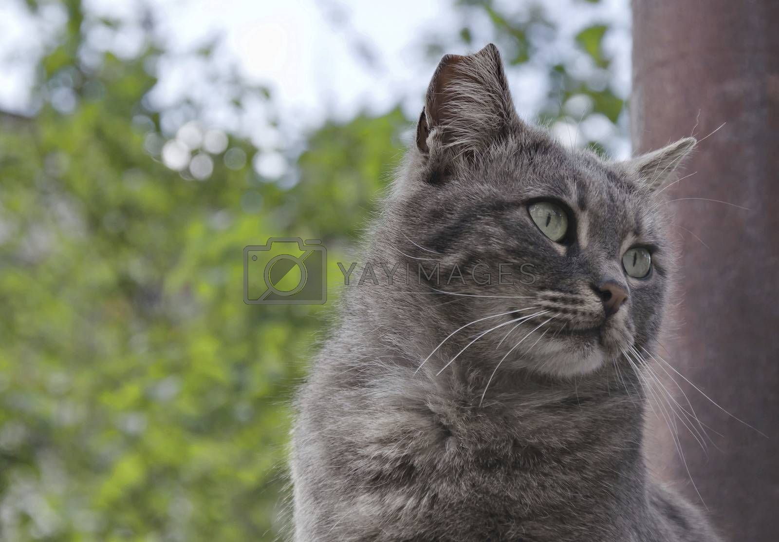 Beauty cat with green eyes look cautious