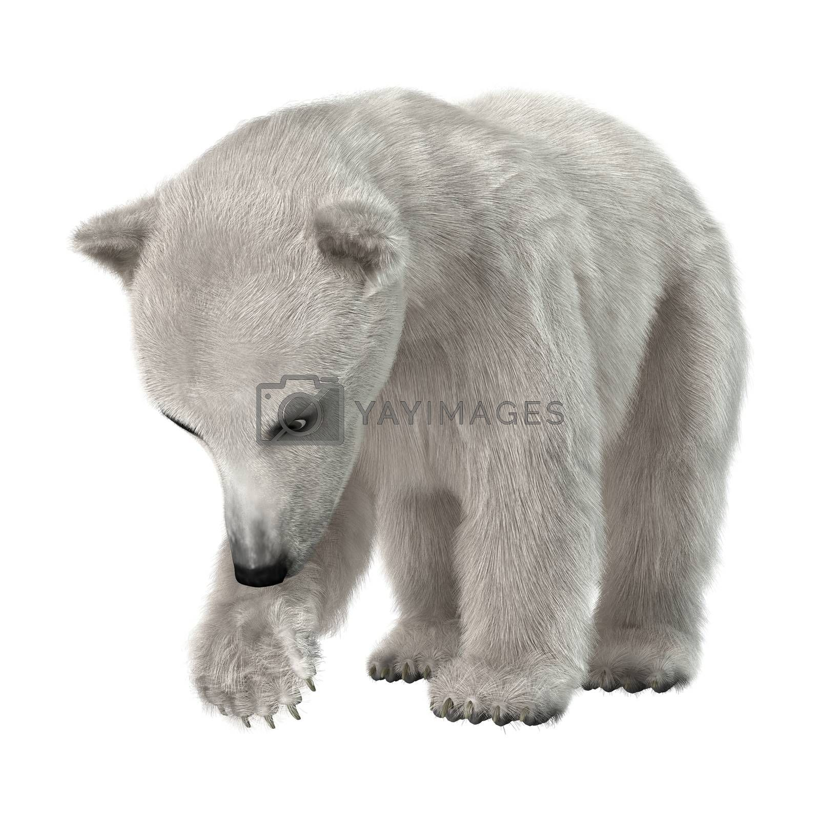 3D digital render of a polar bear cub isolated on white background