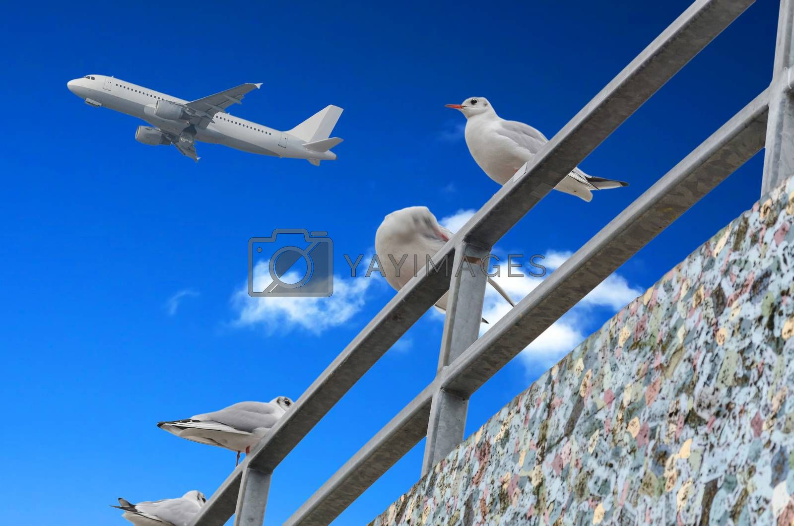 Four seagulls on Gelänger on background of blue sky with clouds and an airplane.