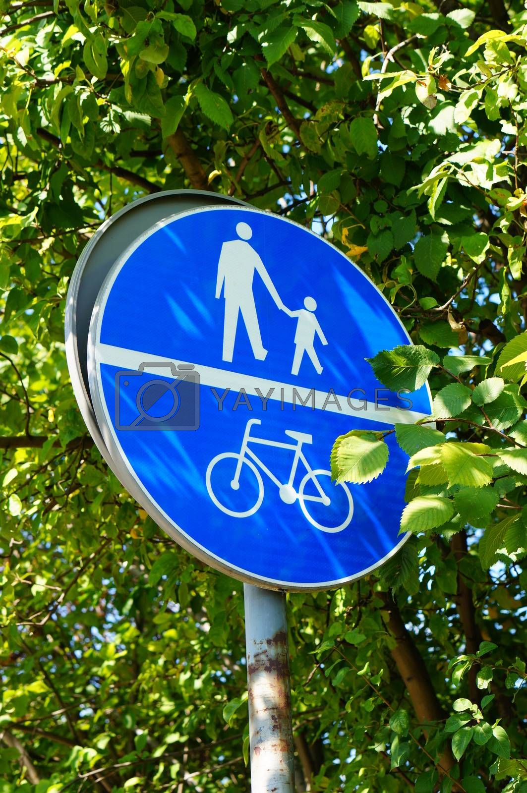 Pedestrian and bicycle sign with green tree leaves