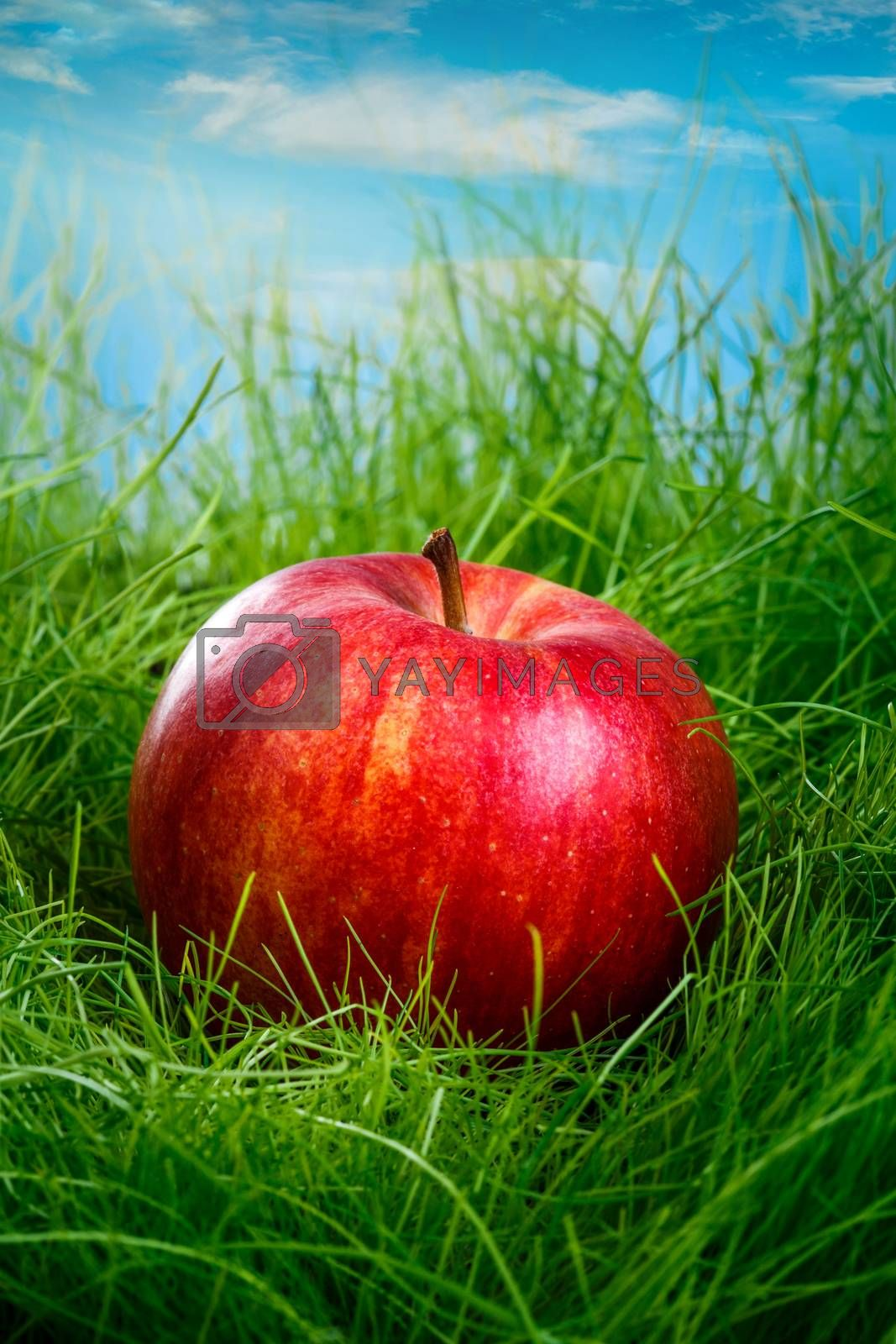 Red apple on the green grass