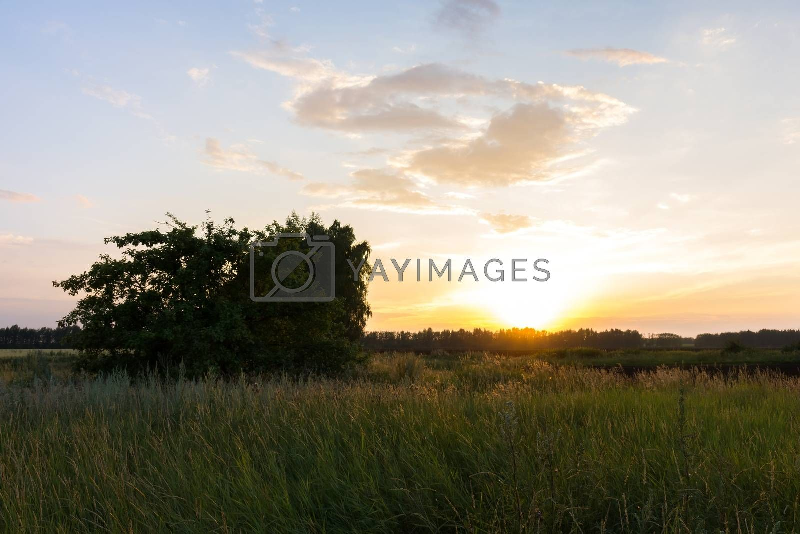 The picture shows a sunset