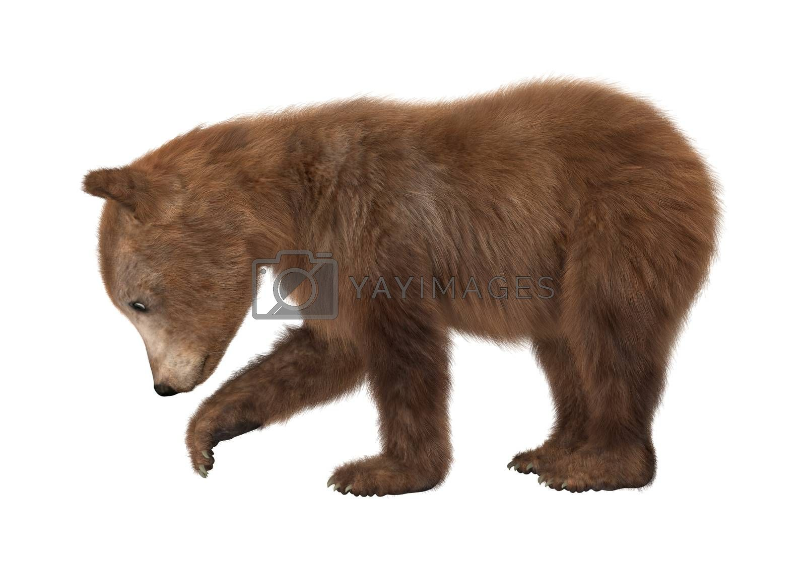 3D digital render of a brown bear cub isolated on white background