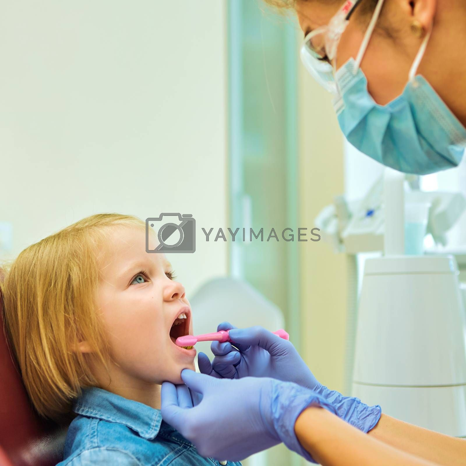 Little patient at the dentist office. The dentist brushes teeth to the little girl