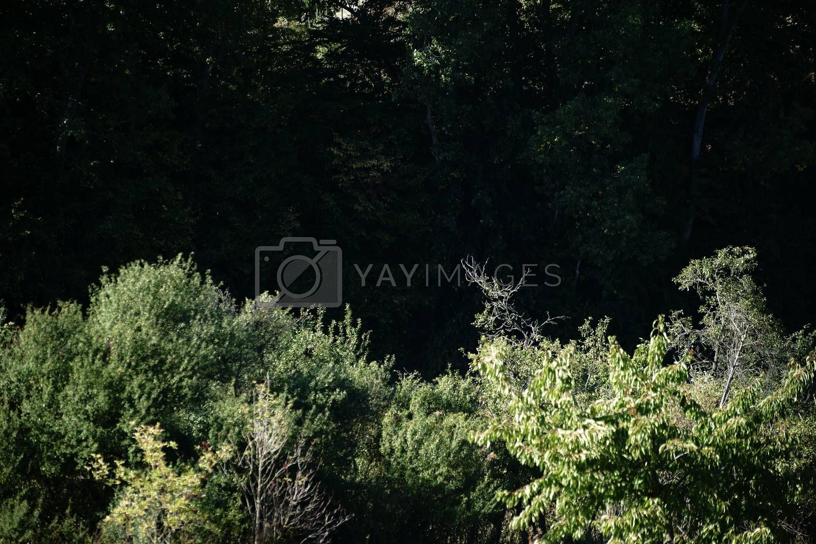 The close-up of the dark thicket of bushes and trees.
