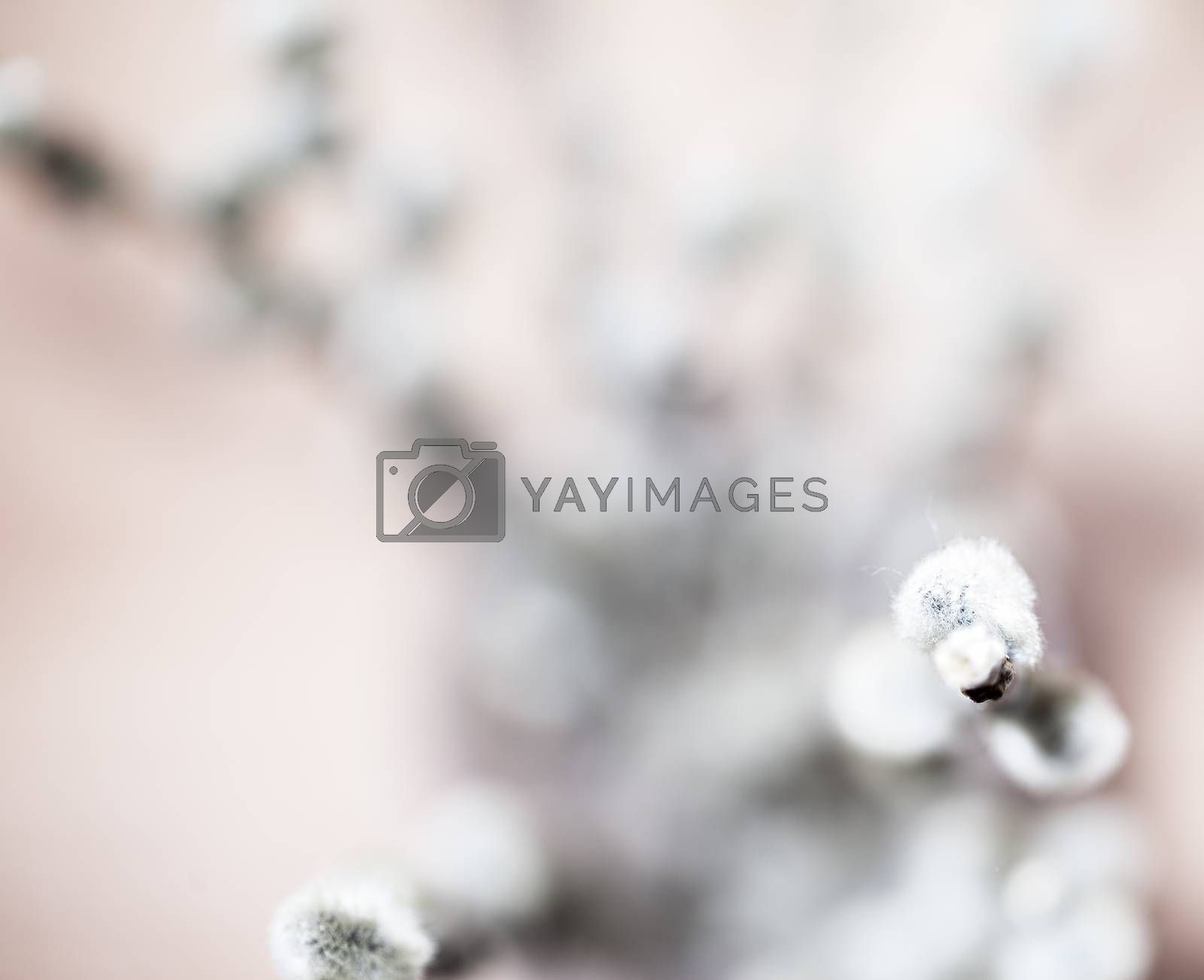 Abstract beautiful gentle spring flower background.  Closeup with soft focus. Shallow focus