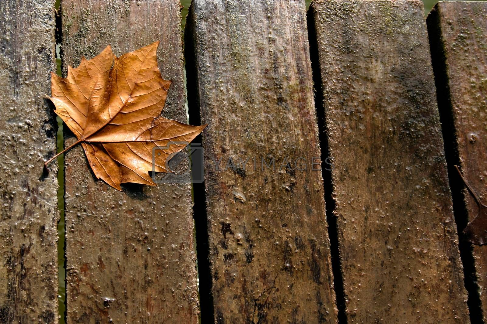Autumn leaf on wooden boards