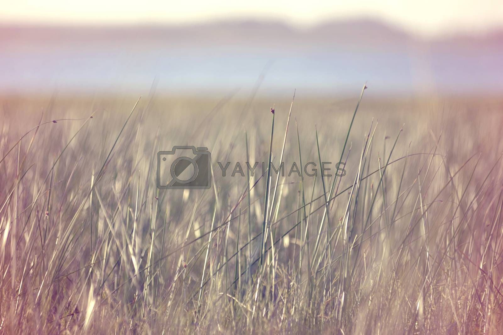Peaceful view of grass meadow with water and clear sky in the background, blur effect and vintage hipster filter.