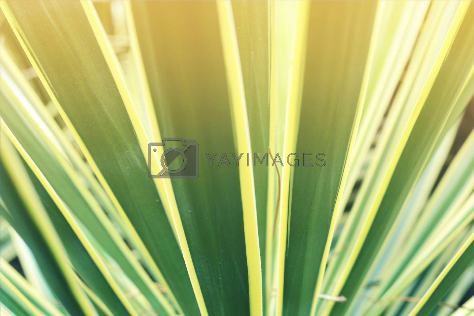 Tropical plant leaf closeup with vintage filter effect and blur background.