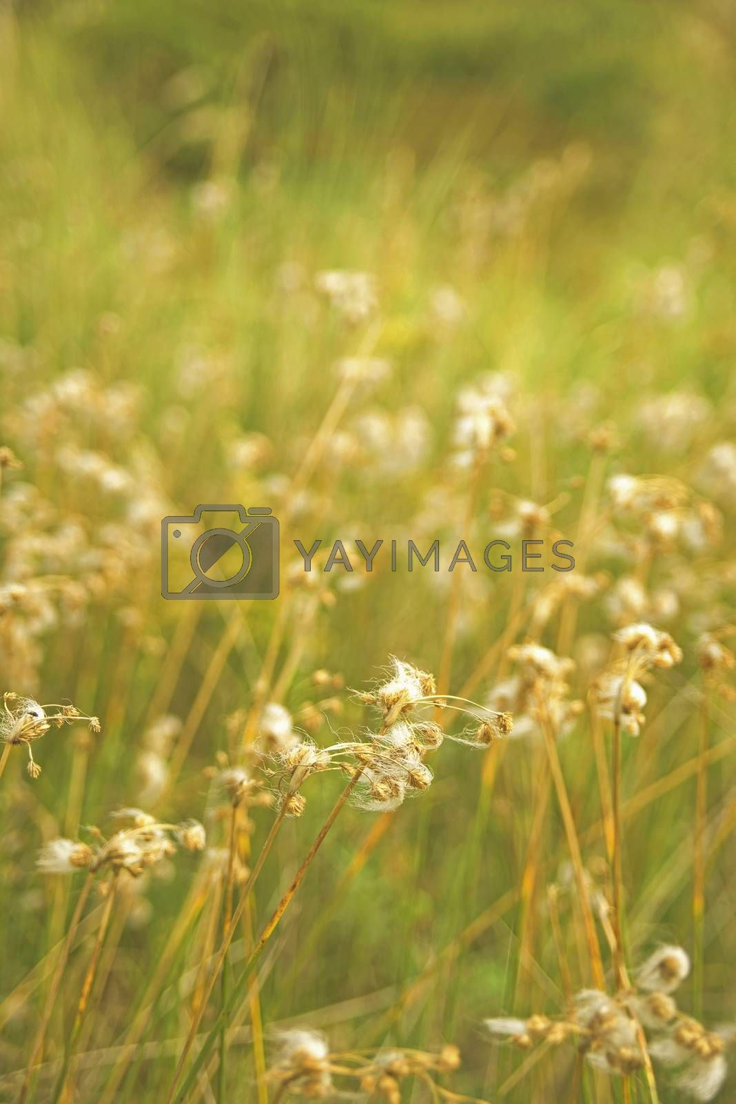 Sunny day in the countryside, closeup of green grass and wild flowers with vintage filter effect and blur background.