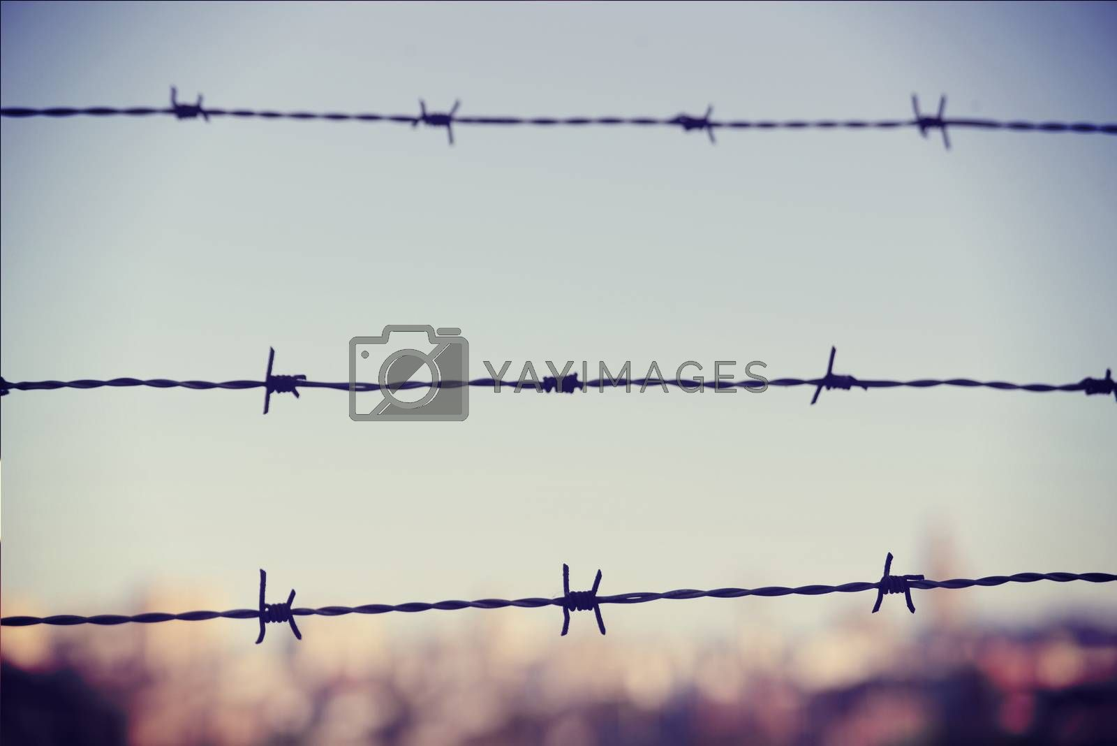 Freedom concept: barbed wire iron fence closeup with blur city in the background and vintage filter effect.