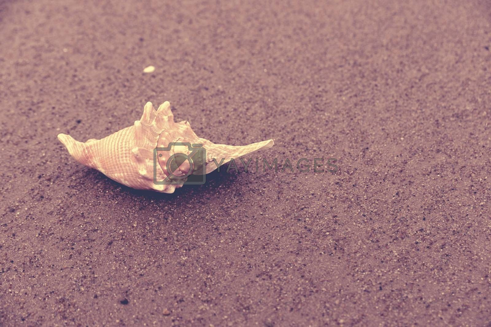 Seashell on wet sand closeup, vintage style filter effect.