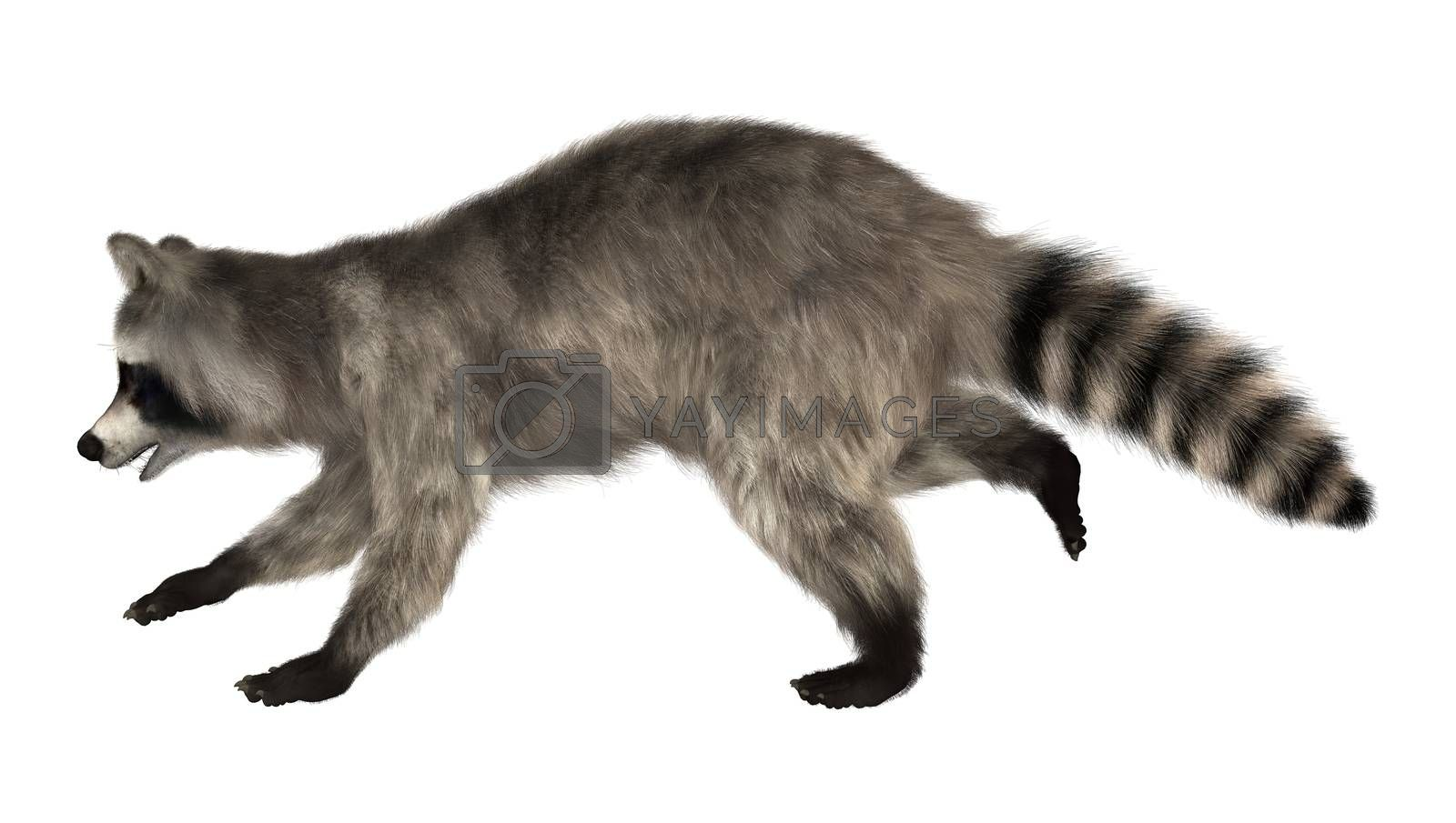 3D digital render of a raccoon running iisolated on white background