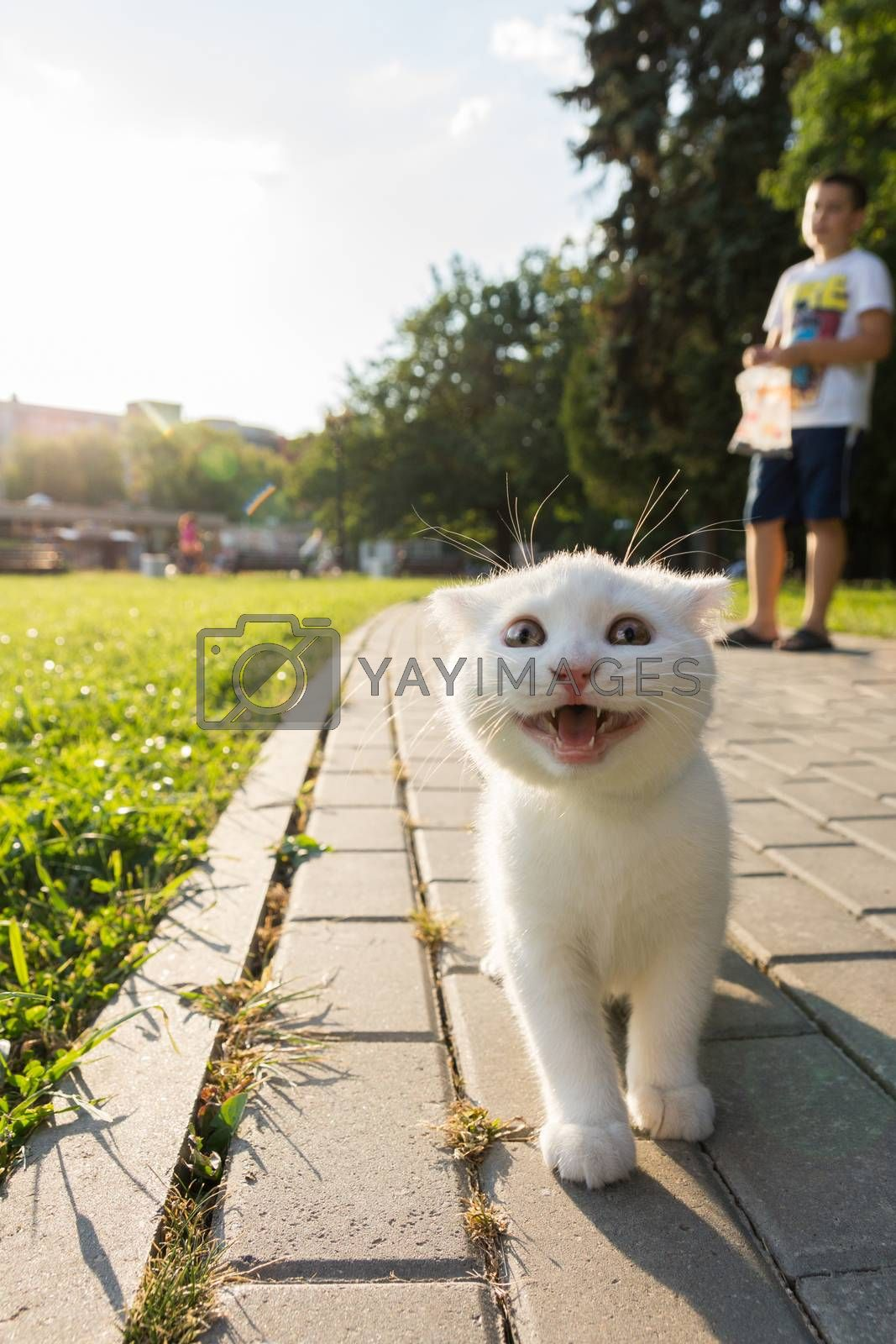 Kitten walks in the Izmailovo Park. He walks with a smile on the pavement.