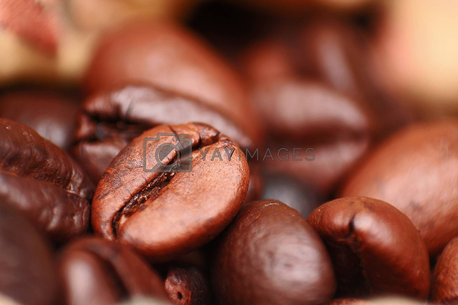 Closeup of coffee seed and focus on fracture of it