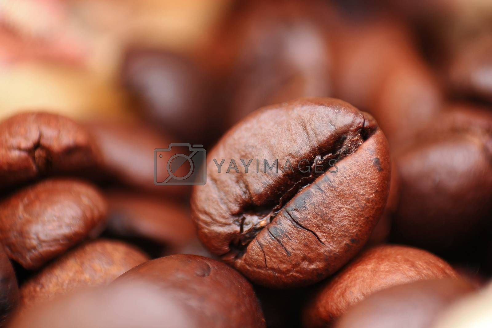 Closeup of coffee seed with focus on one