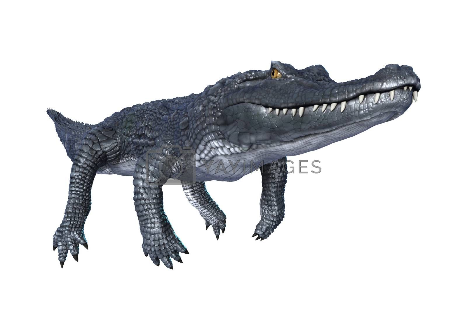 3D digital render of a caiman isolated on white background