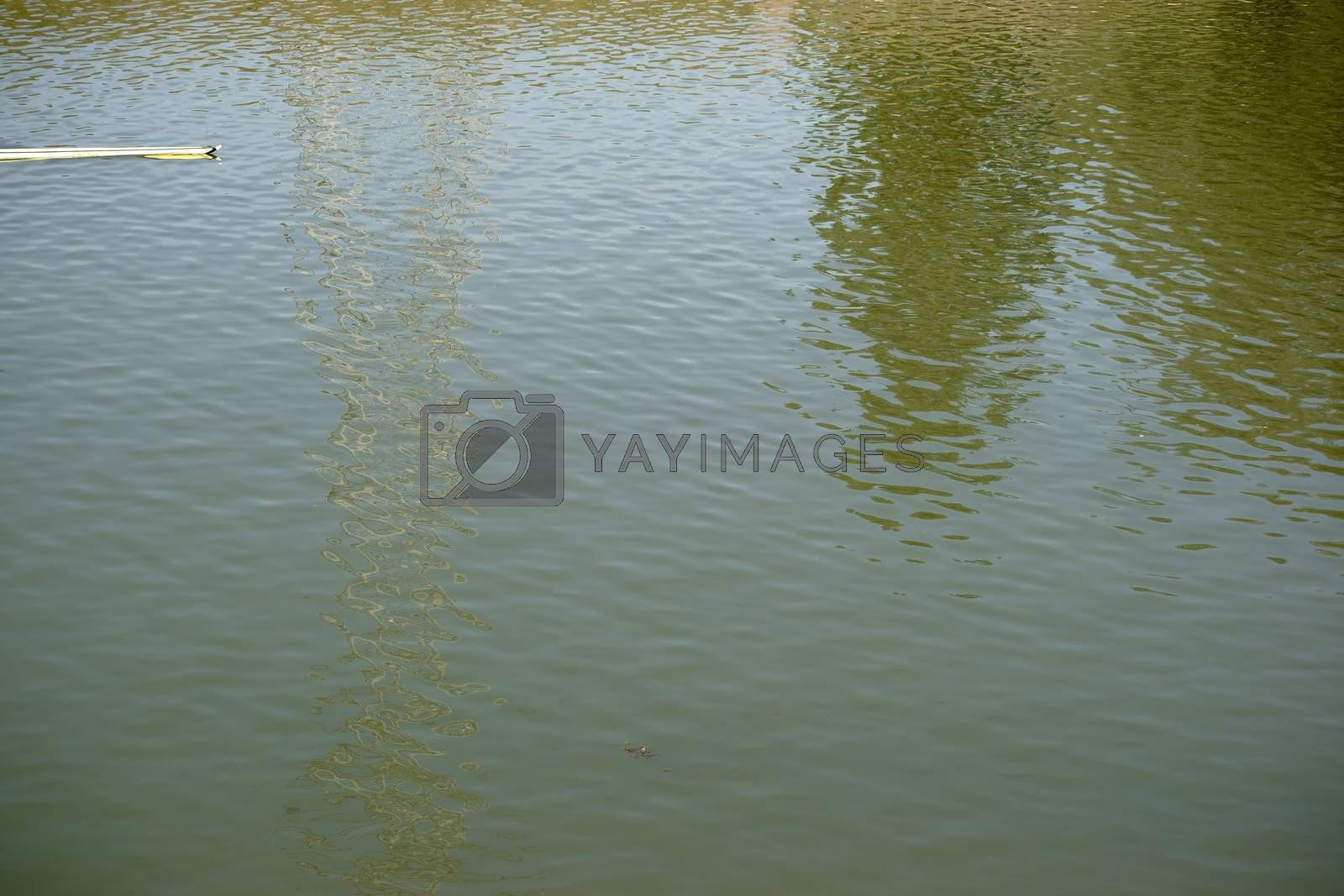 A sports rowing boat cuts through a shiny wavy water surface with reflections.