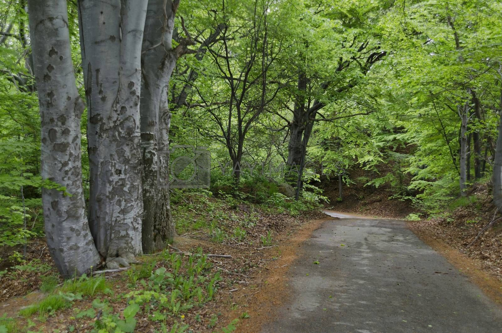 Panorama of picturesque forest and road