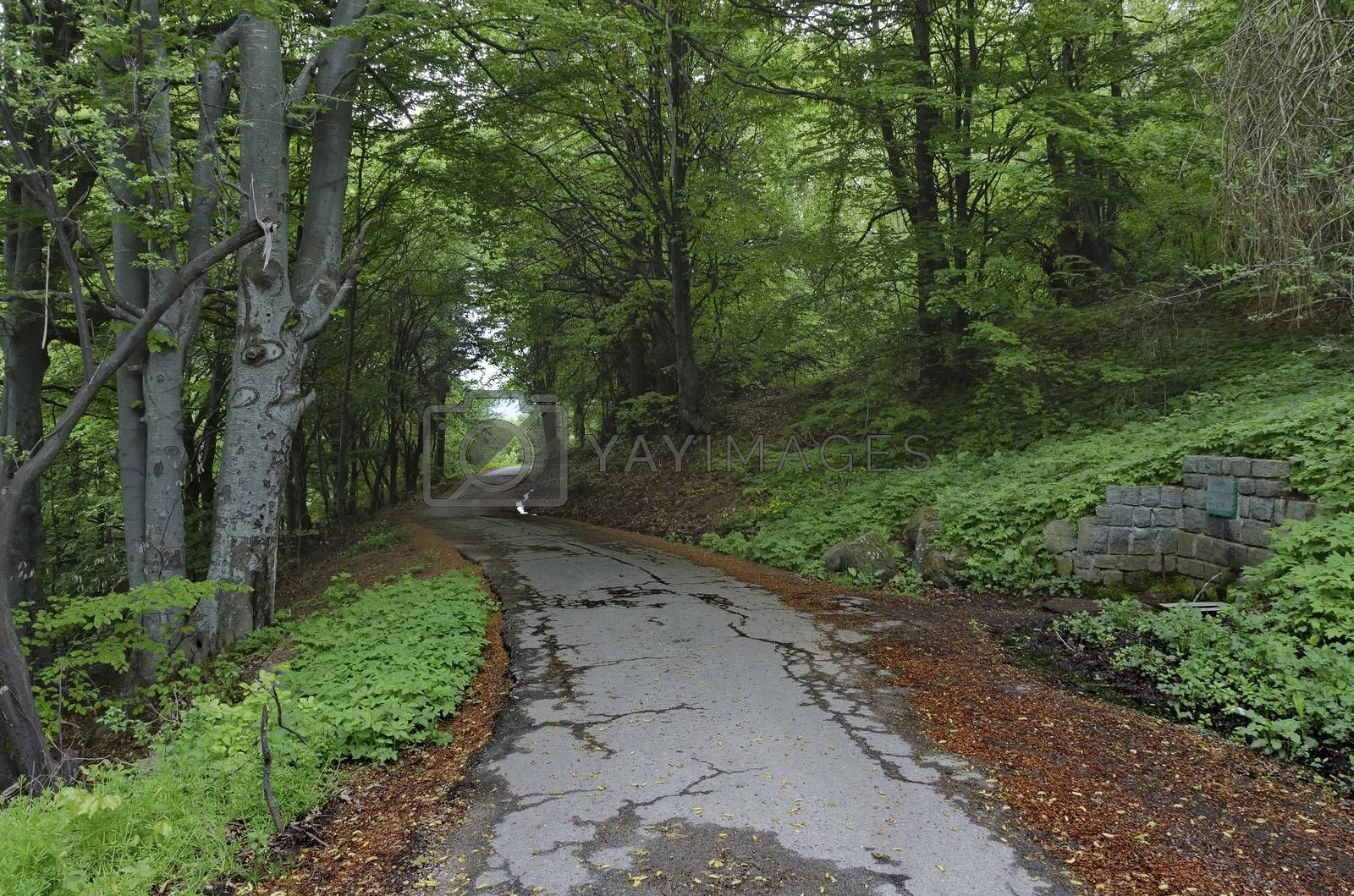 Panorama of picturesque forest with road and fountain