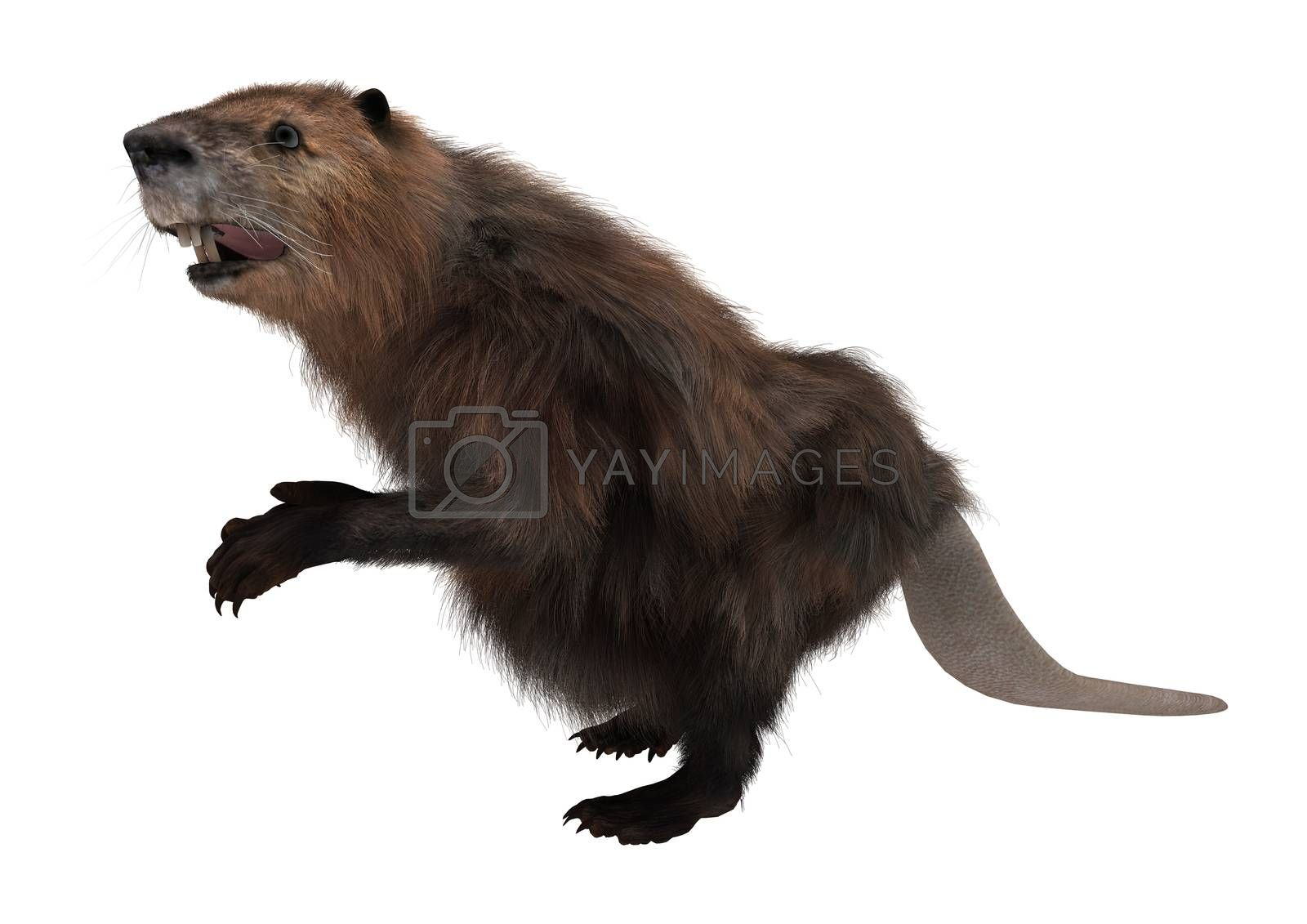 3D digital render of a beaver isolated on white background