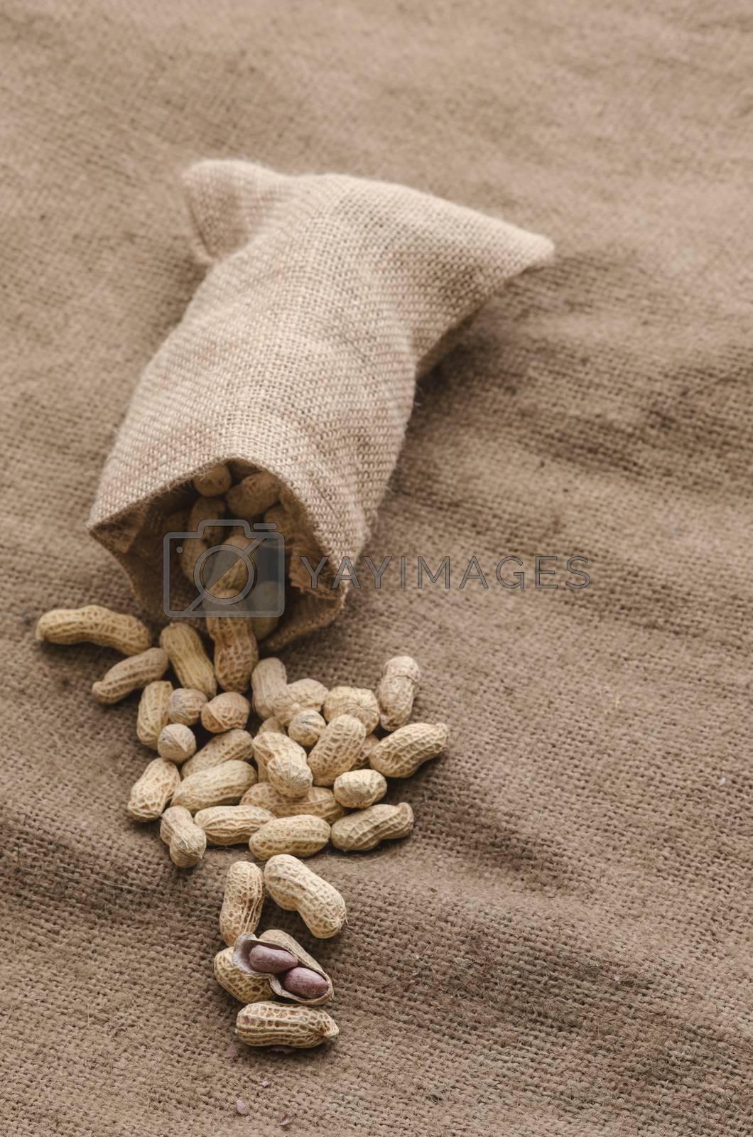 Roasted peanuts on sackcloth background