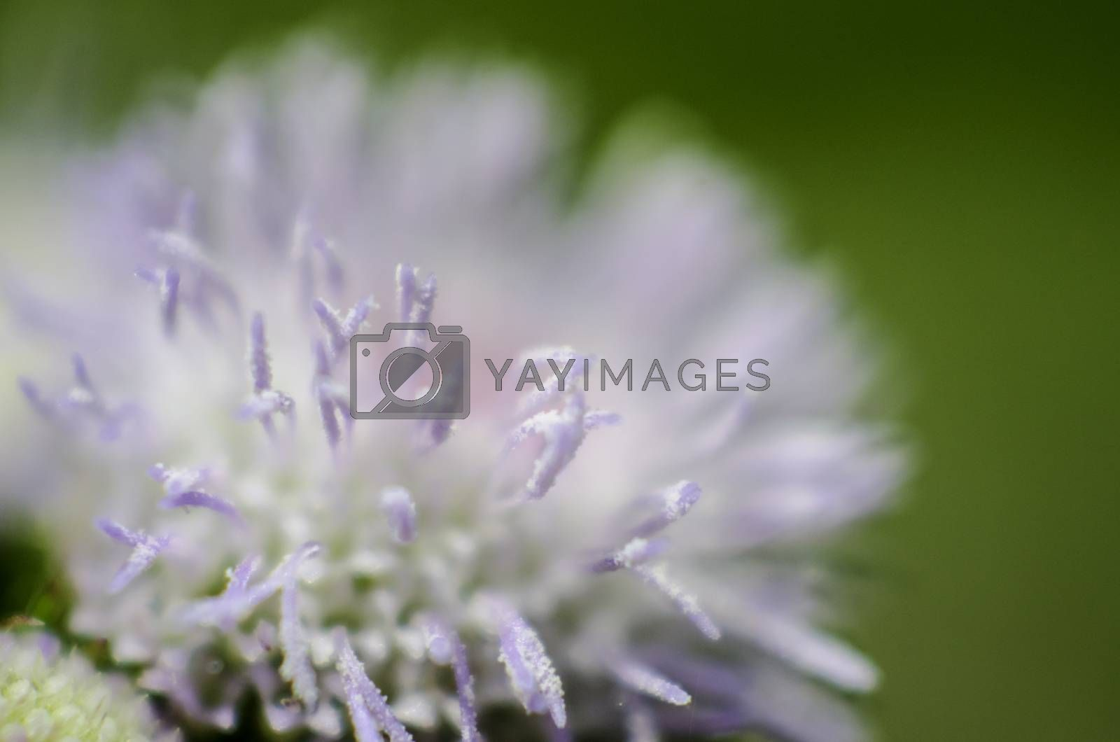 Flower close up shot with green color background, Fragile concept