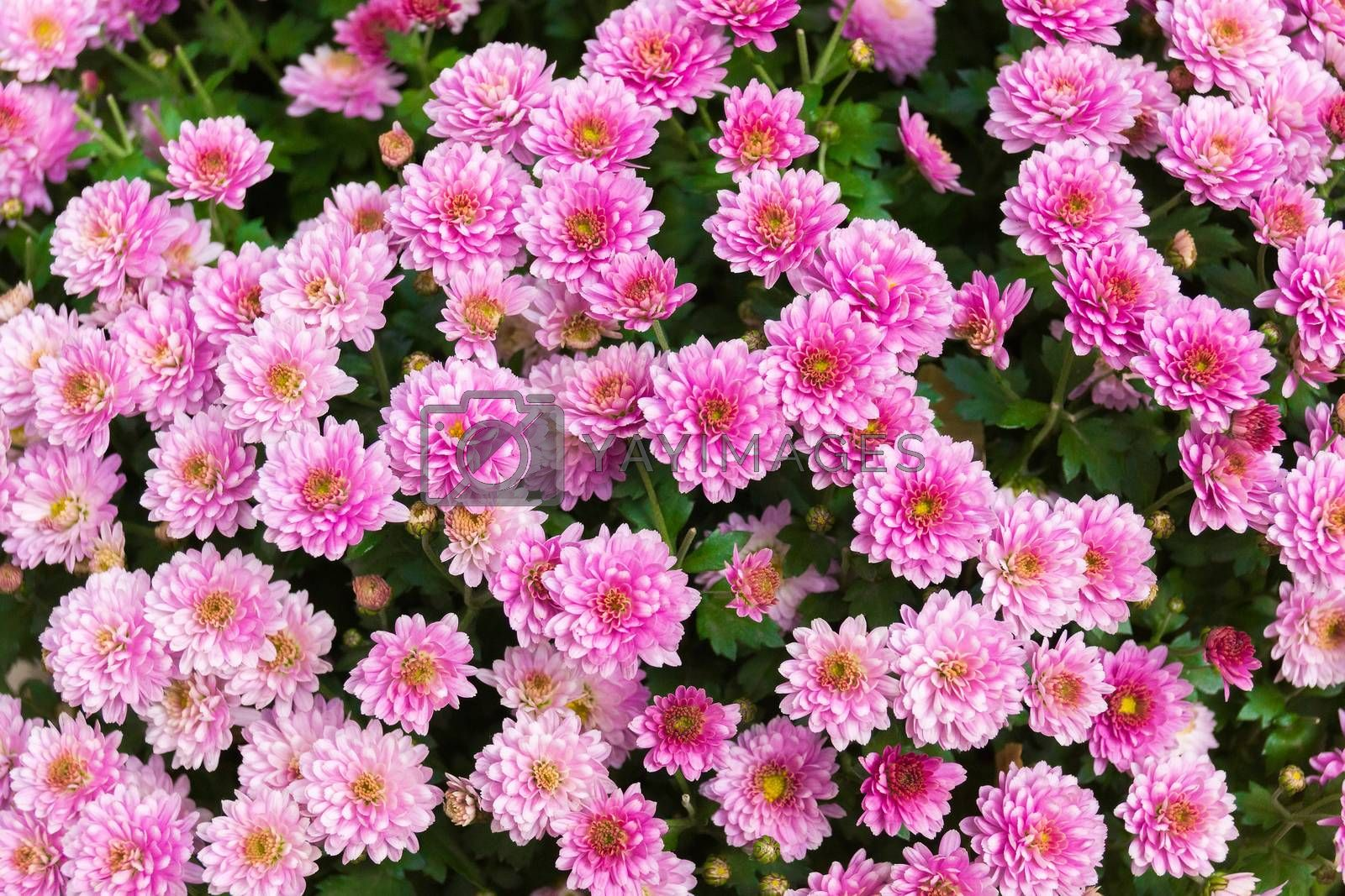The photo shows flowers in the flowerbed