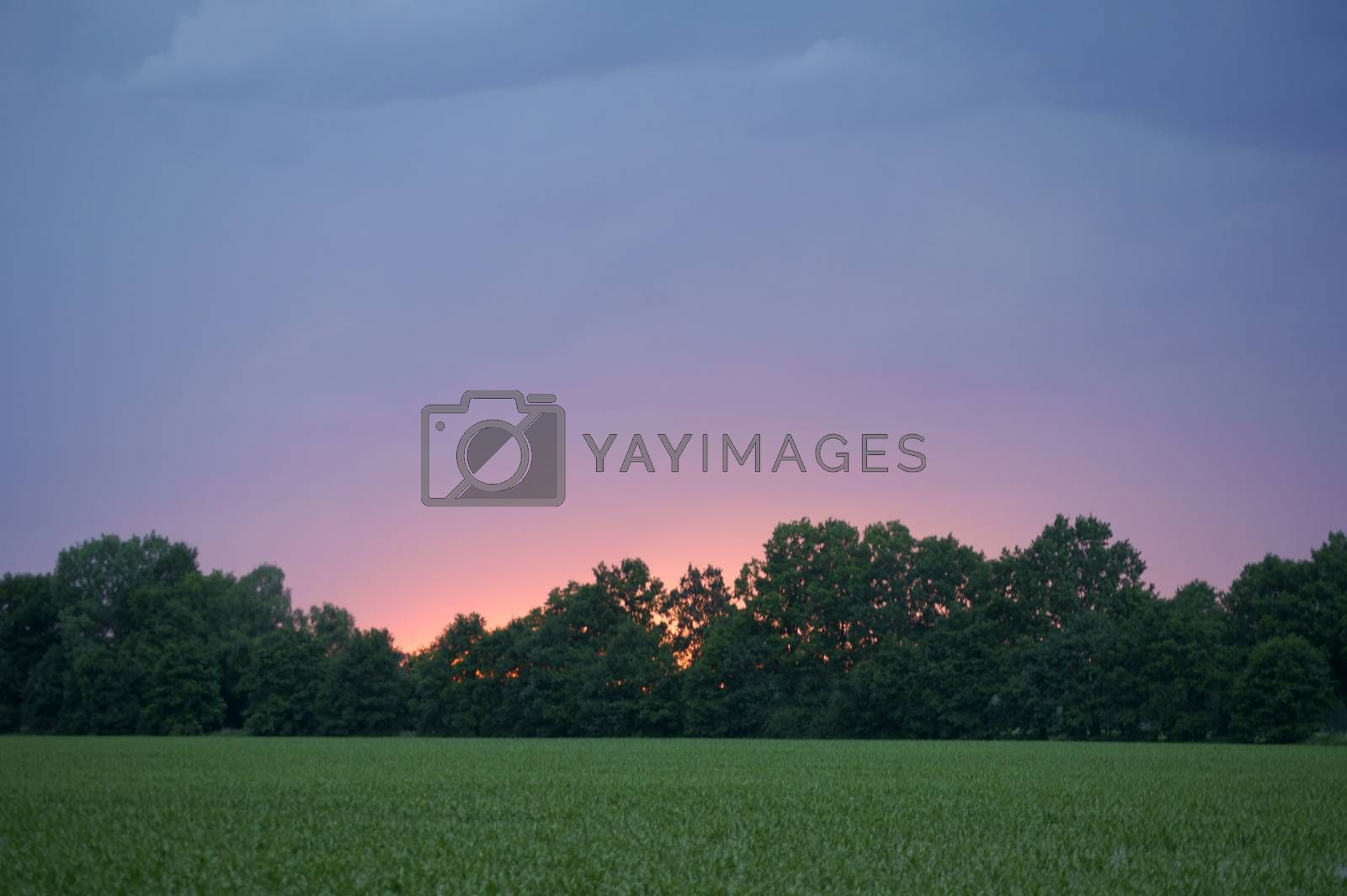 A red-yellow and pink colored sunset with the sun which sets behind a row of trees.