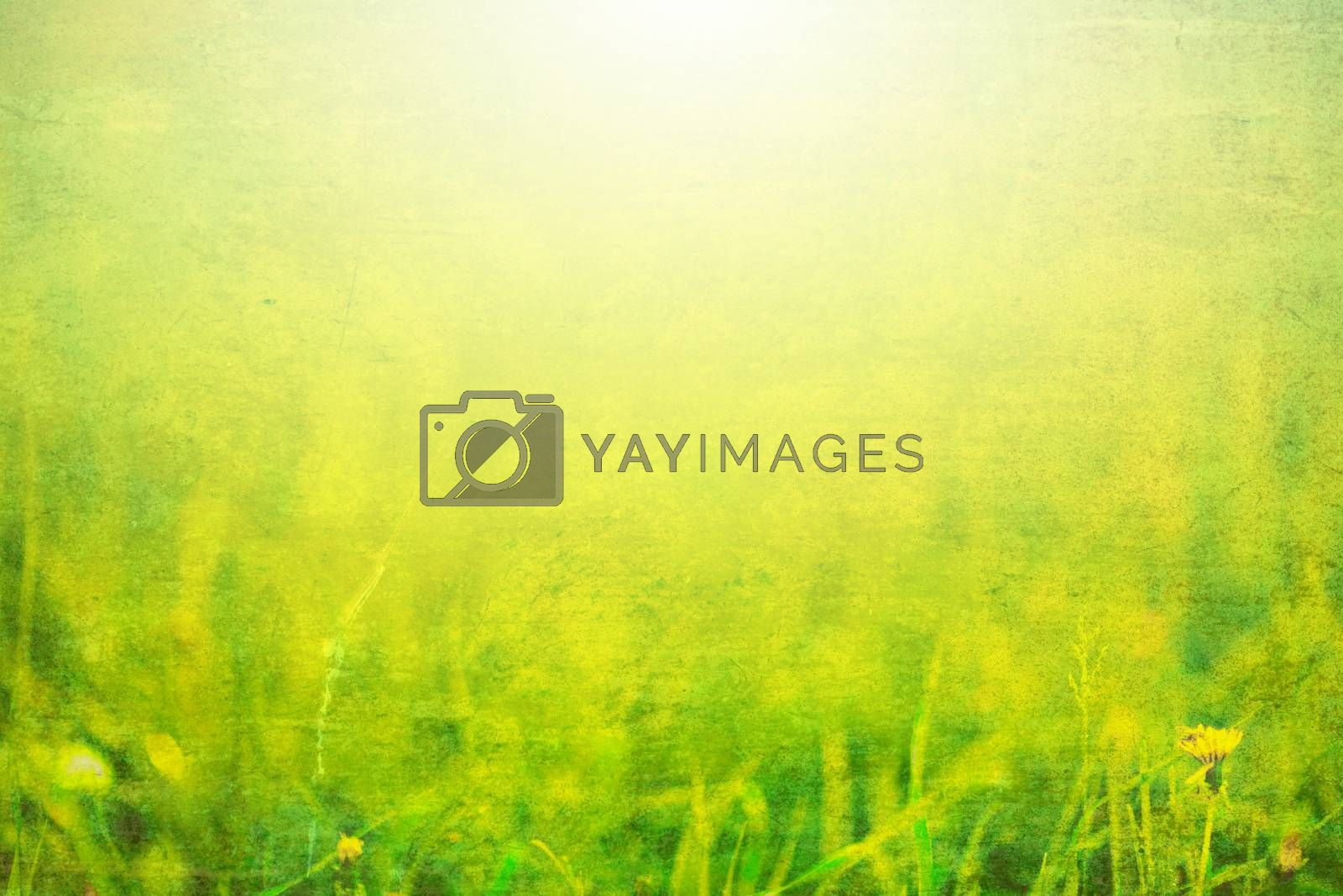 Photo of grass with sunlight