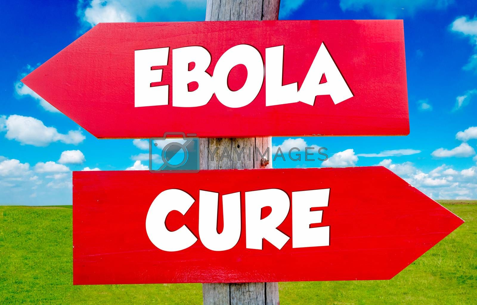 Ebola  concept on the red signs with landscape in background