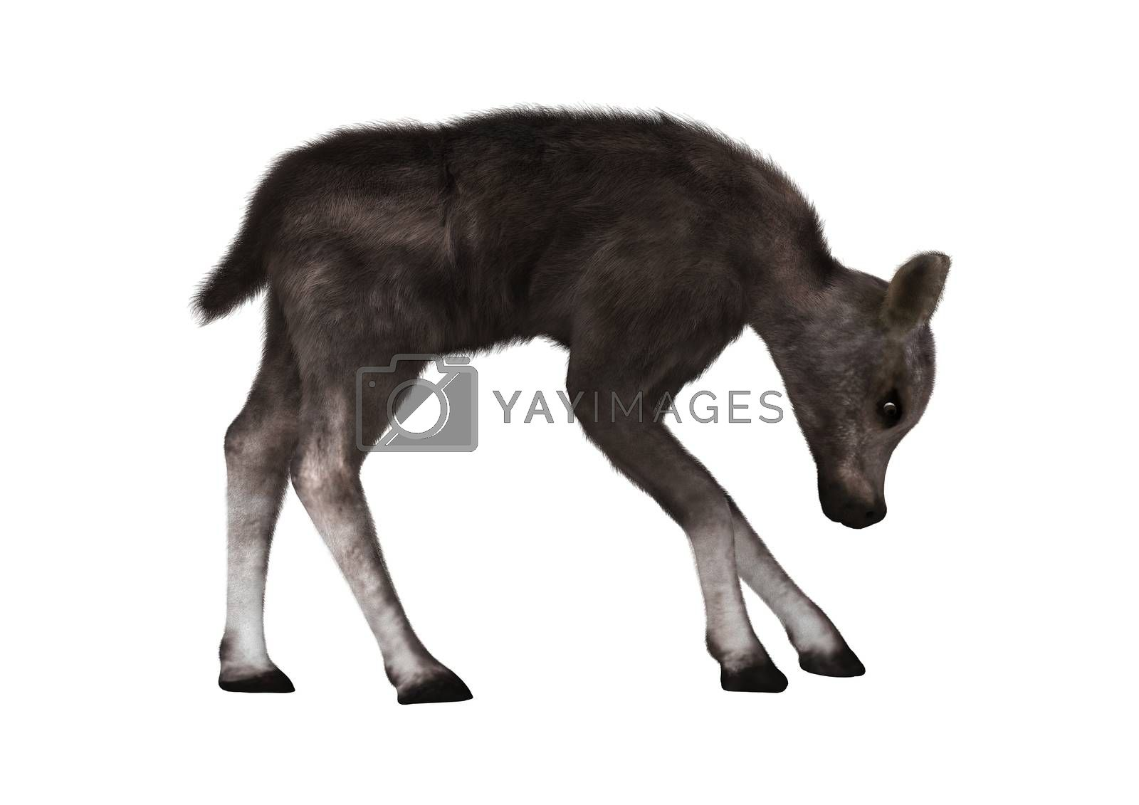 3D digital render of a caribou calf isolated on white background