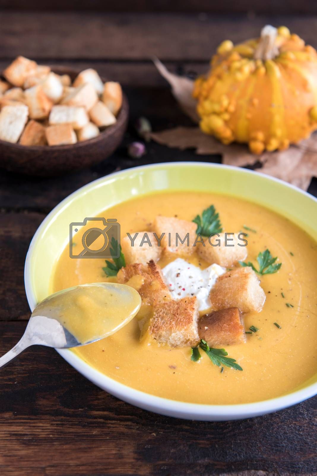 Homemade pumpkin soup with milk cream and croutons bread in the plate,selective focus