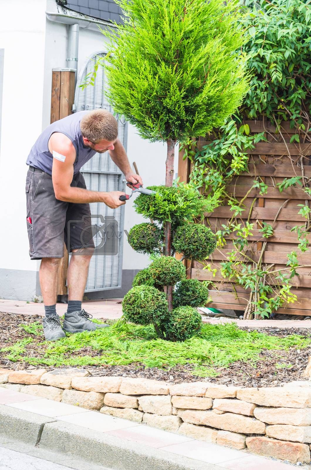 A gardener cuts the topiary  by JFsPic