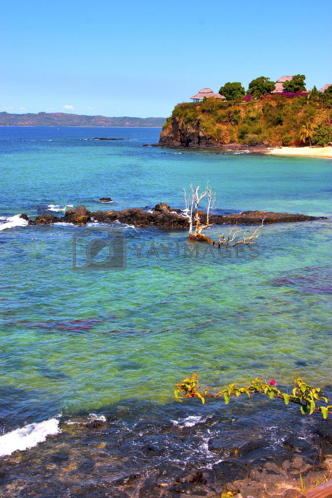 andilana beach seaweed in indian ocean madagascar   by lkpro
