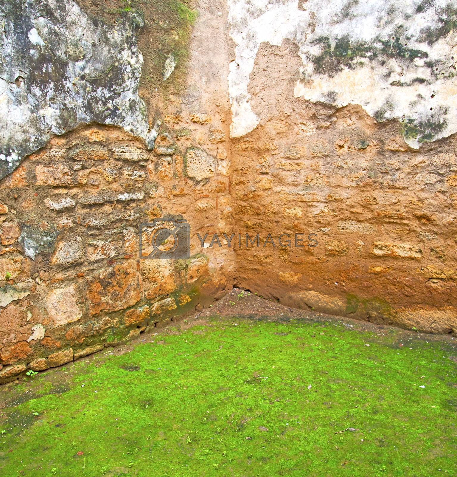 chellah  in morocco africa the old roman deteriorated monument a by lkpro